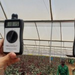 Quantum + UV Rate inside of Greenhouse