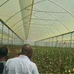 greenhouse 12